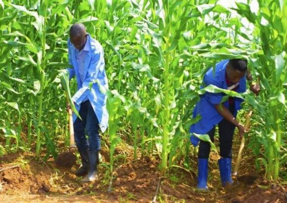 Diploma in Crop Production and Management